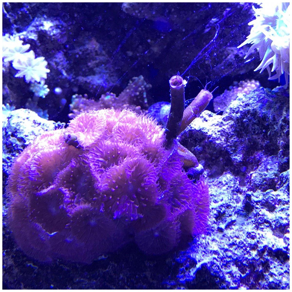 Tube Worm Pests Reef2reef Saltwater And Reef Aquarium Forum
