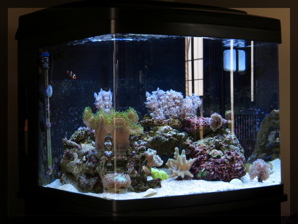 My biocube 29 reef2reef saltwater and reef aquarium forum for Bio cube fish tank