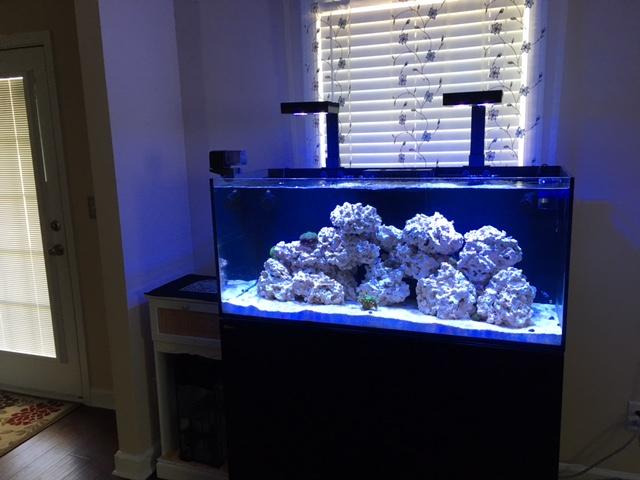 Red Sea Reefer 350 Deluxe Reef2reef Saltwater And Reef