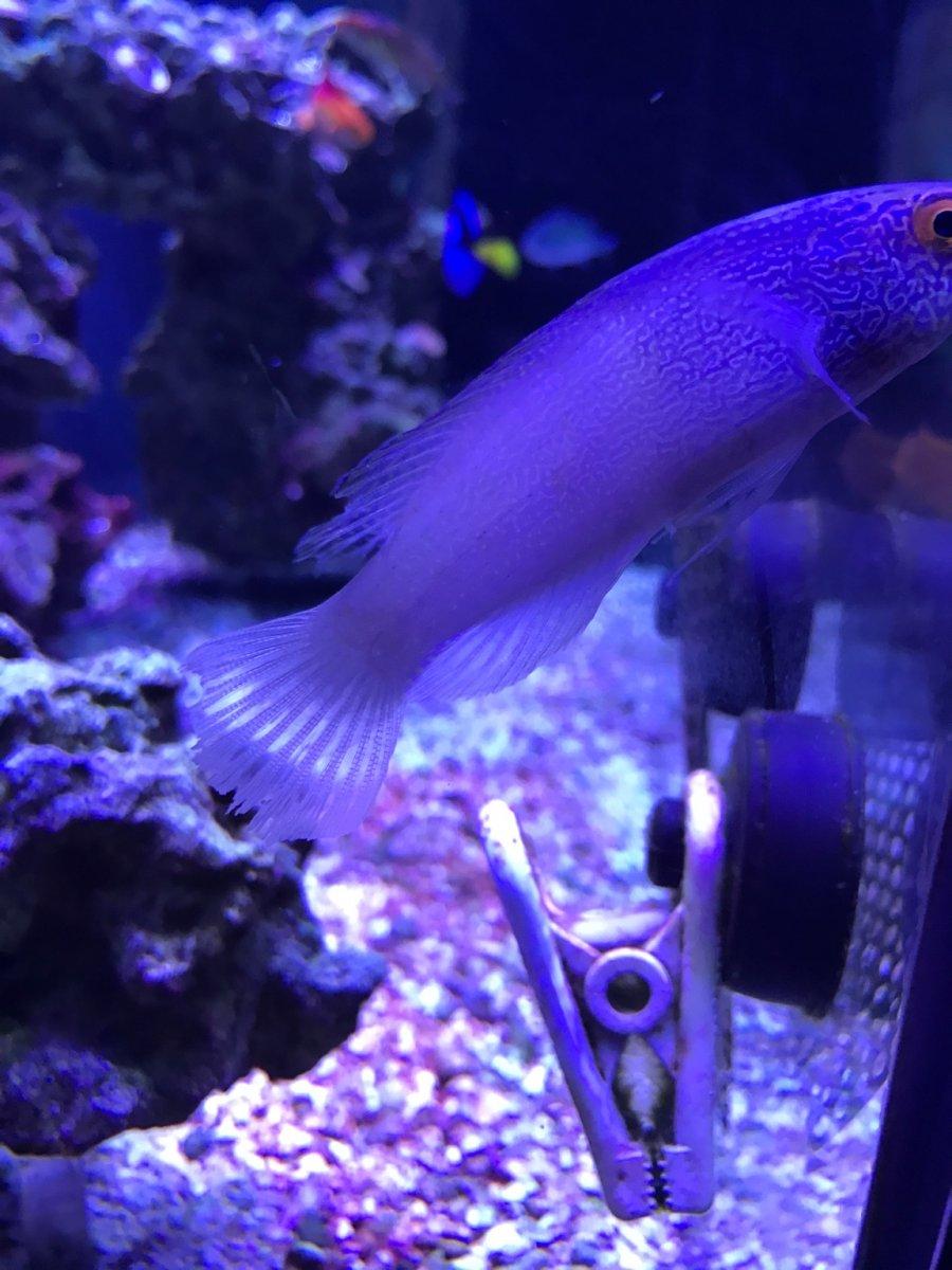 Freshwater aquarium fish not eating - Img_1369