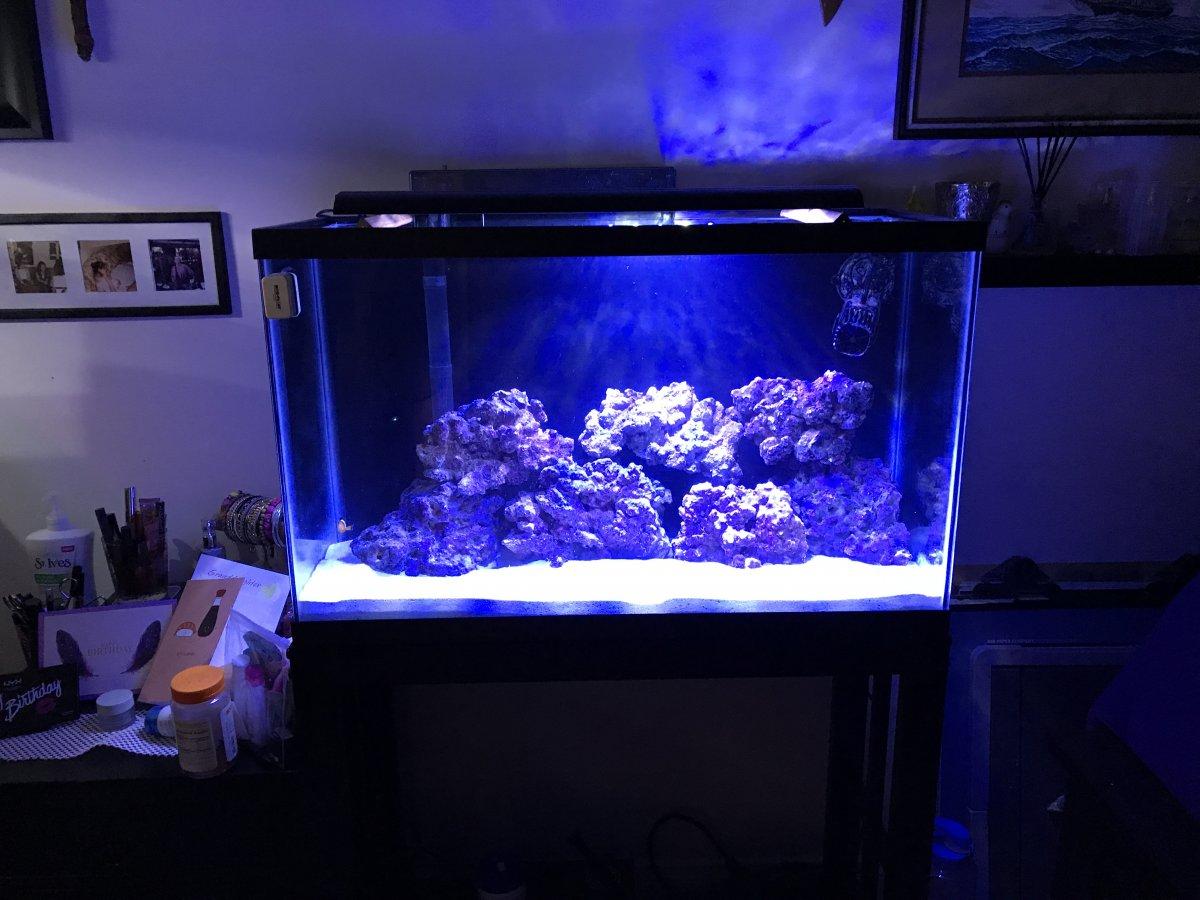 29 Gallon Reef Tank Build Reef2reef Saltwater And Reef