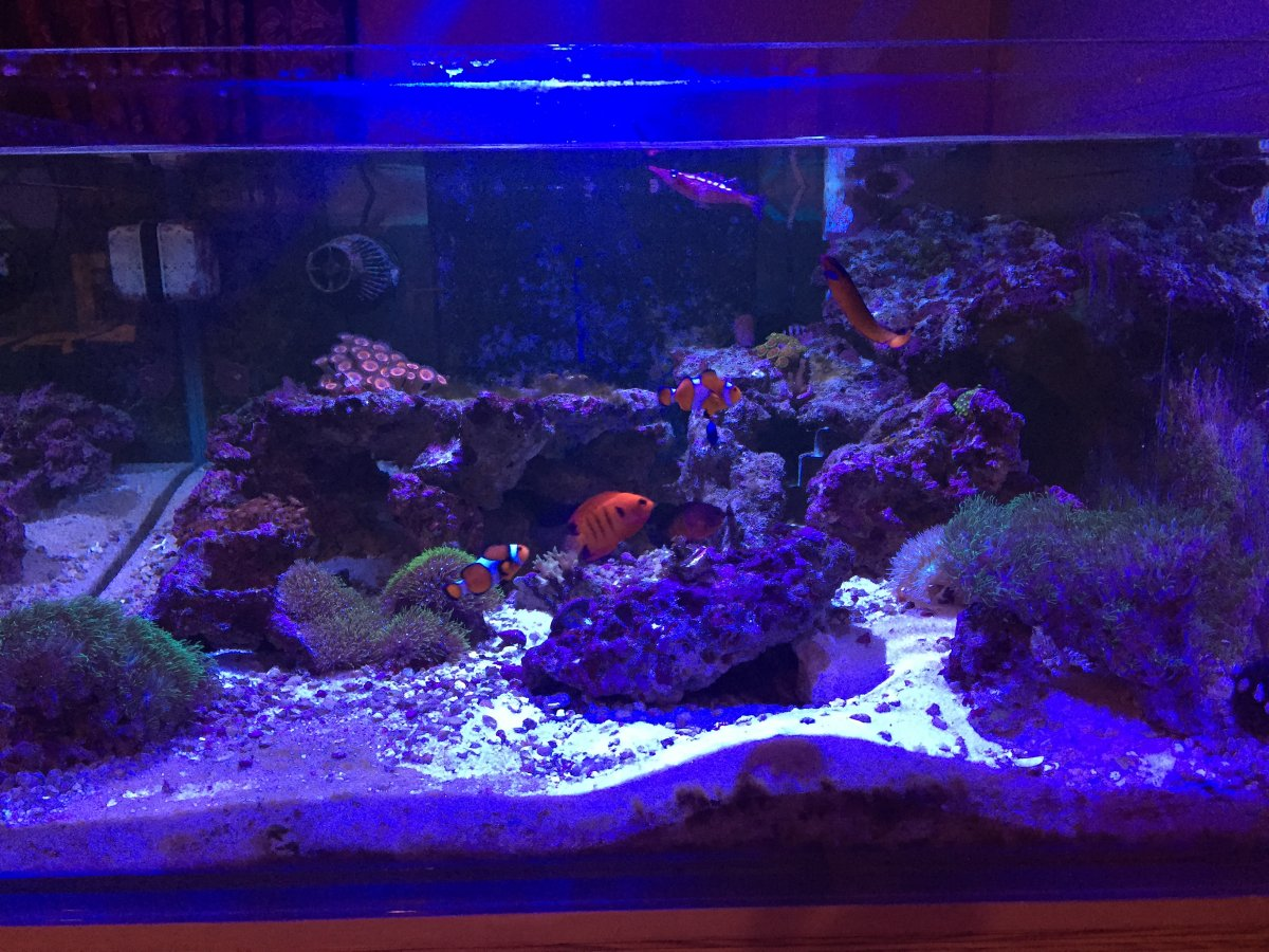 65 gallon rimless tank and custom stand for sale reef2reef
