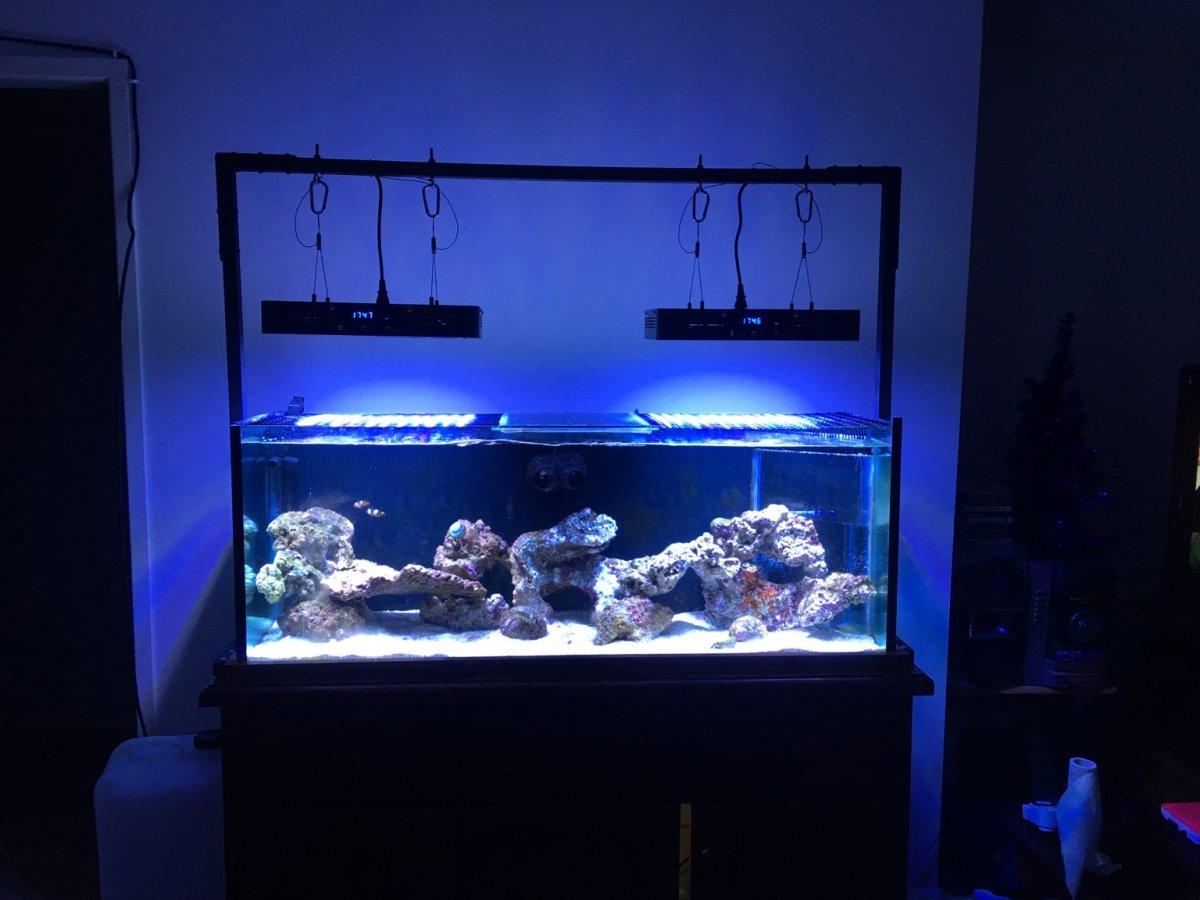 Aquarium Craft Ideas