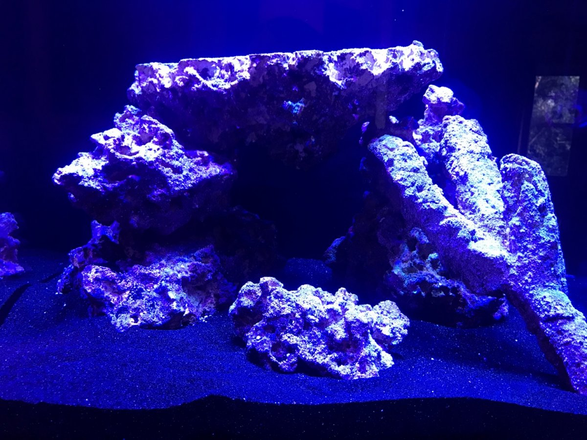 New Tank 50g Sc Aquariums Starfire Reef Ready Reef2reef