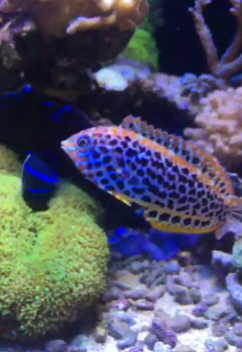 Freshwater aquarium fish not eating - Img_1483519423 151370 Jpg