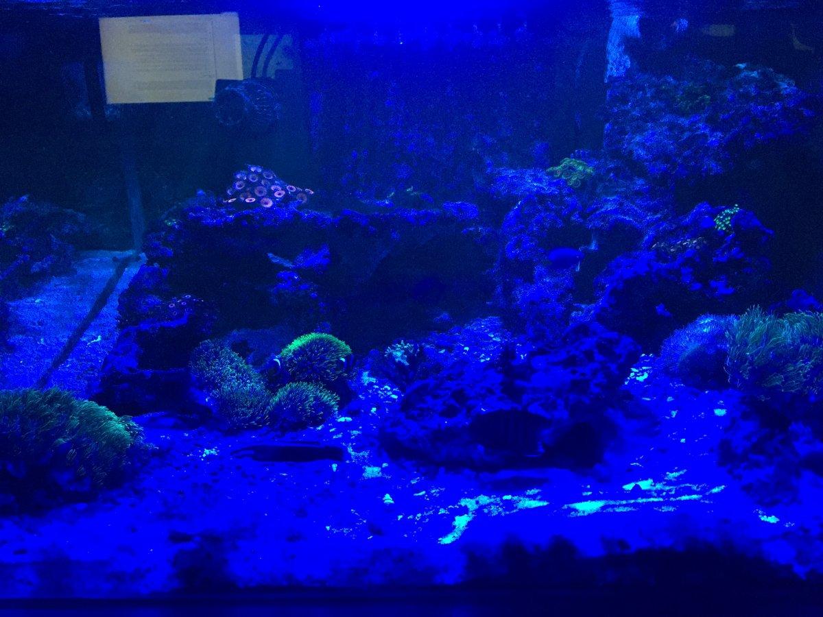 Freshwater aquarium fish milwaukee - Jpg Img_1505