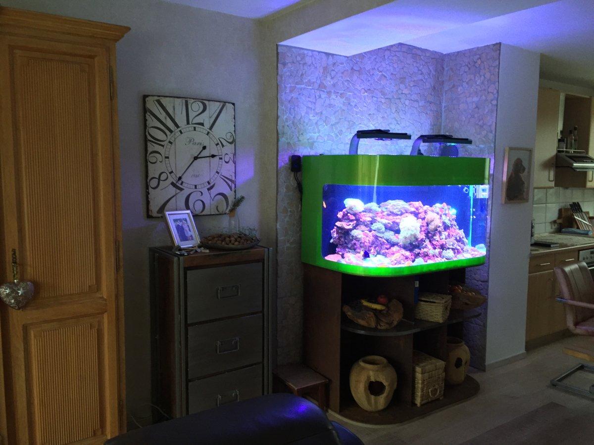schuran seawater aquarium 450 liter reef2reef saltwater and reef aquarium forum. Black Bedroom Furniture Sets. Home Design Ideas