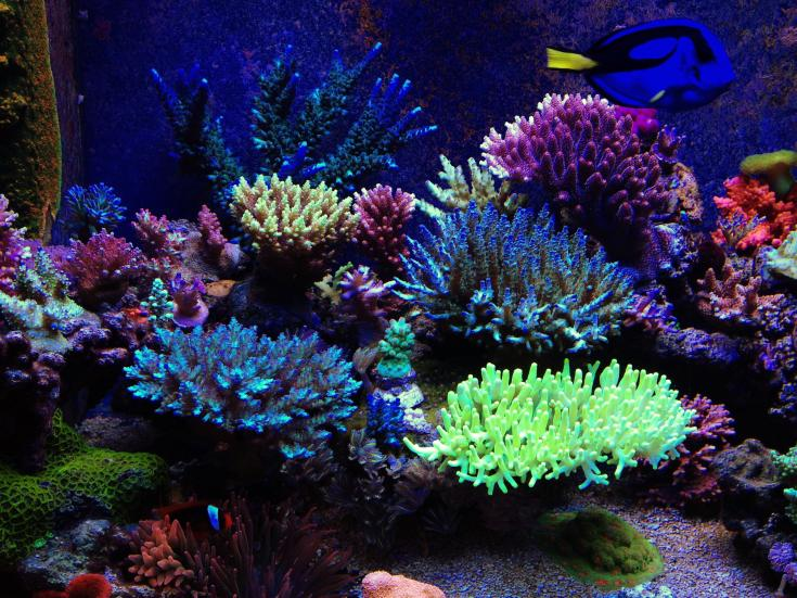 Let S See Your T5 Sps Tanks Reef2reef Saltwater And