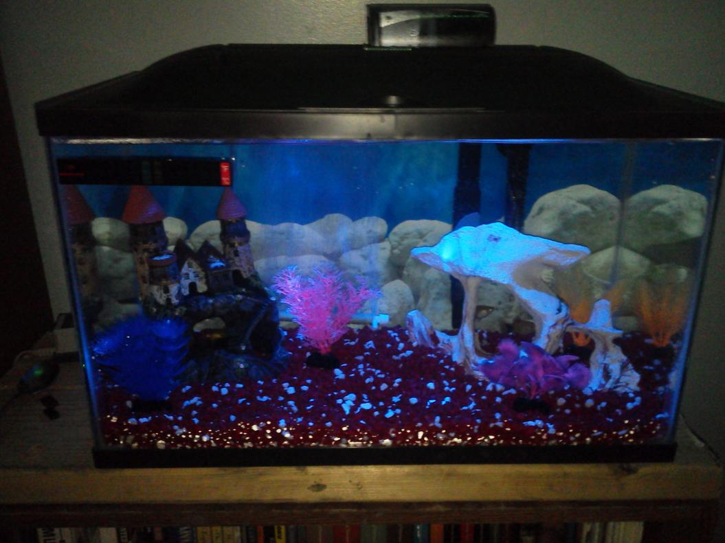 My 55 gal saltwater journey reef2reef saltwater and reef for Free fish tanks craigslist