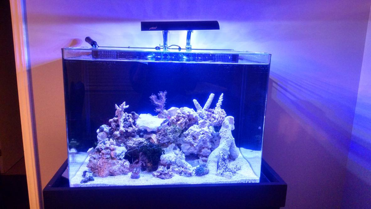 Gopi S Jbj 45 Rimless For Seahorses Reef2reef