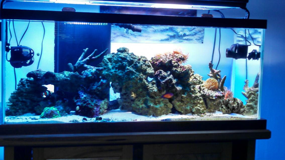 power head positions for my 75 gal reef2reef saltwater and reef