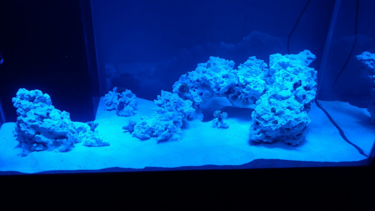 50g Fowlr To Reef Page 9 Reef2reef Saltwater And Reef