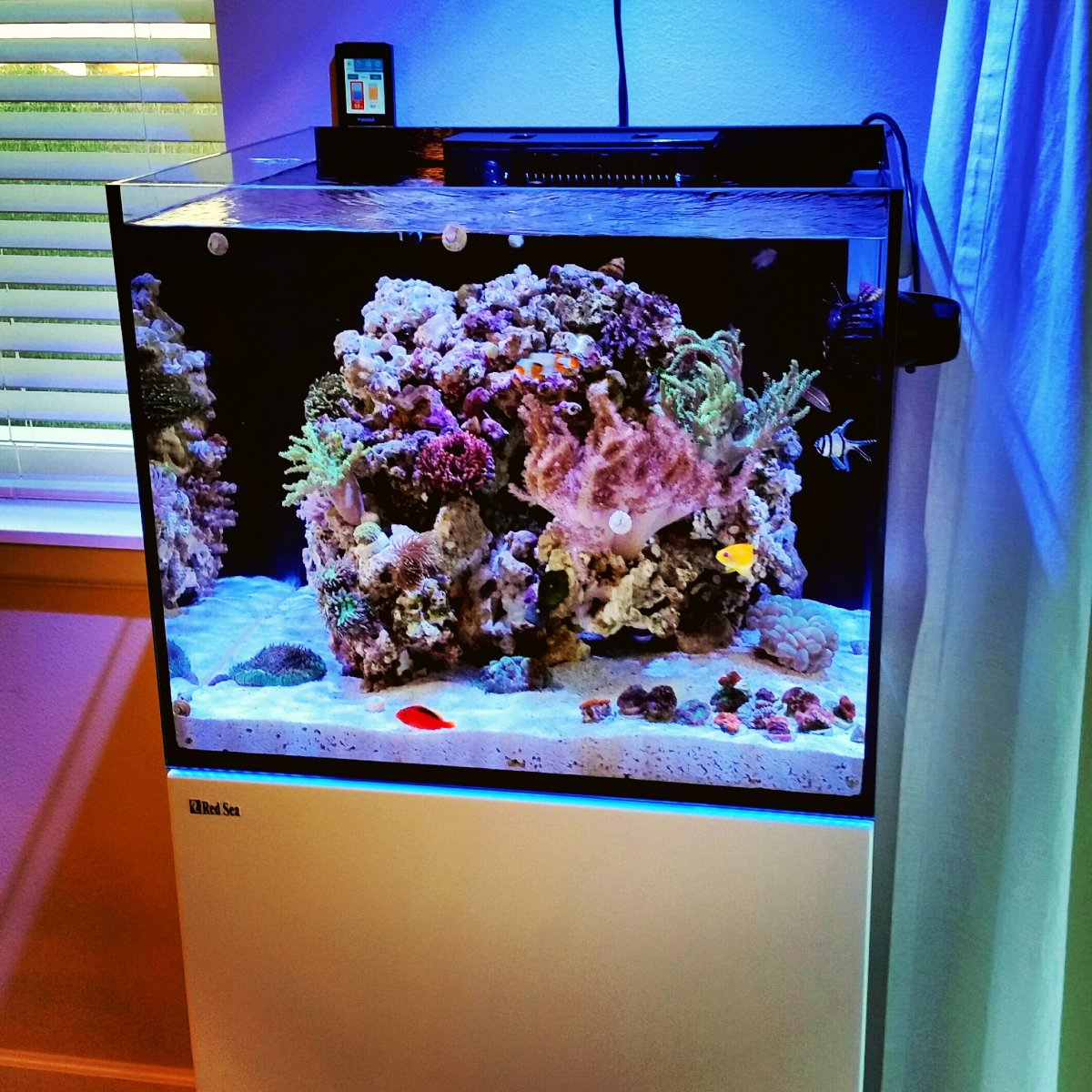 dd911 39 s red sea reefer 170 reef2reef saltwater and reef. Black Bedroom Furniture Sets. Home Design Ideas
