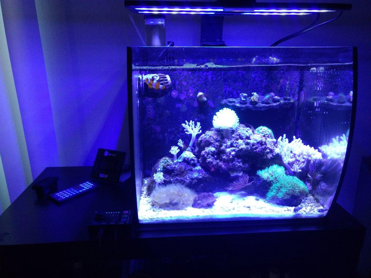 Ron's Flex 15   REEF2REEF Saltwater and Reef Aquarium Forum