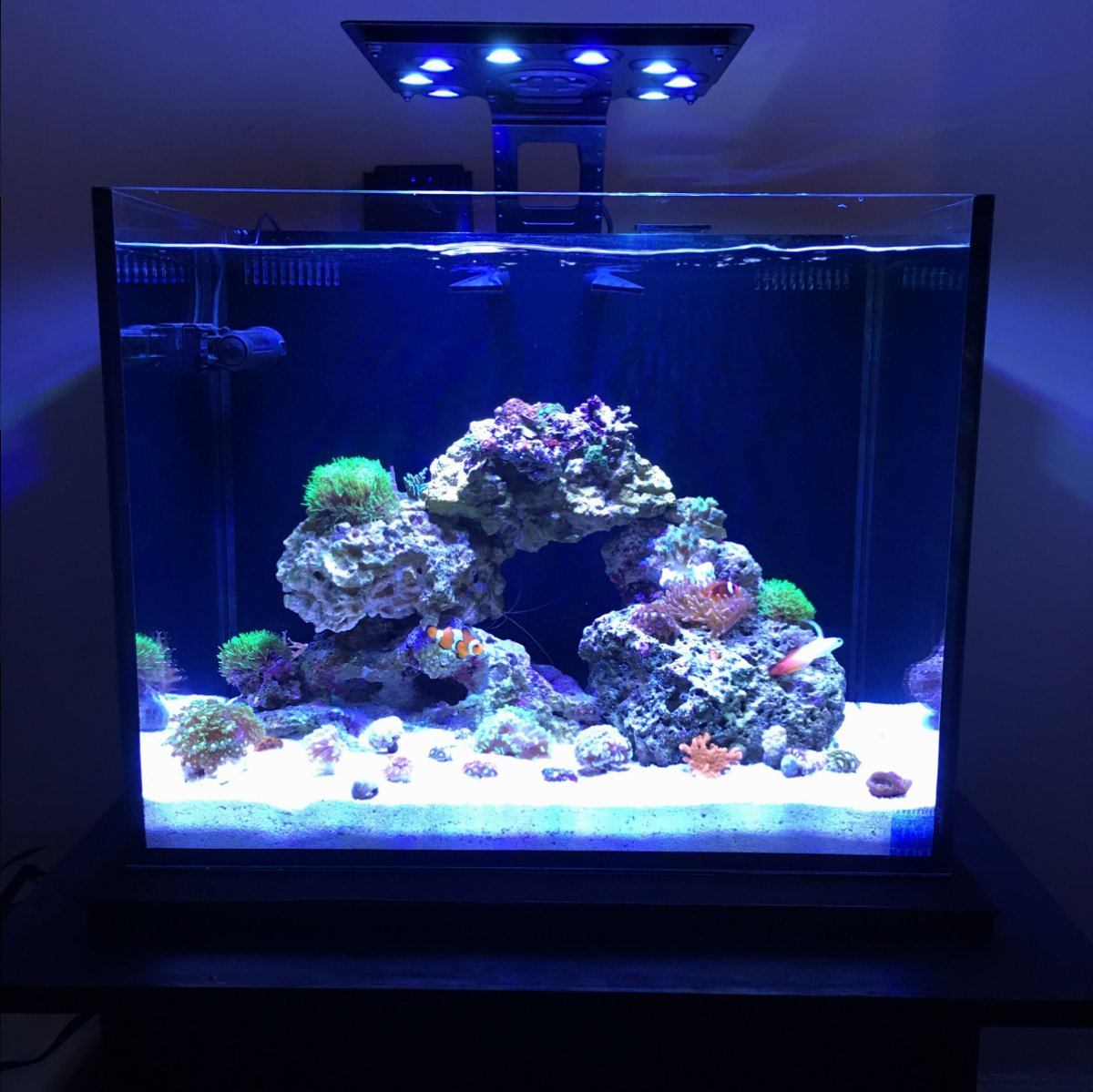 Show Off Your Nano Tank Aquascape Page 7 Reef2reef