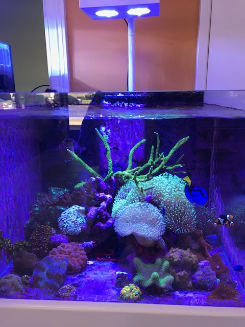 ai hydra 26 hd spectrum setting reef2reef saltwater and reef
