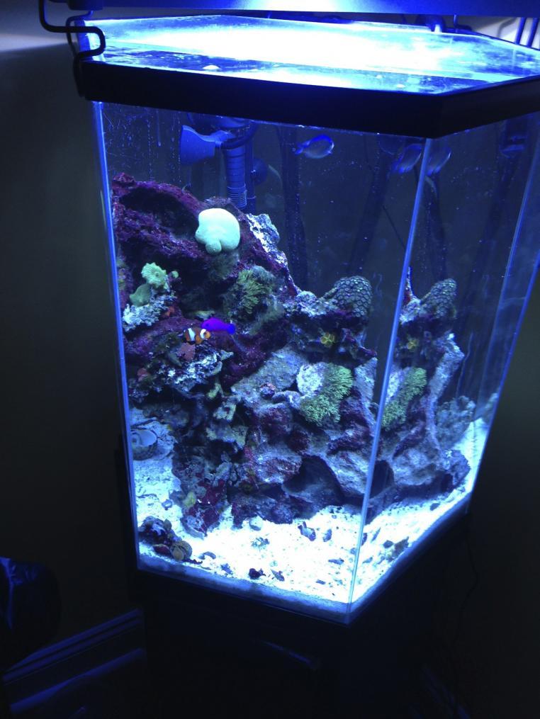 Please Help New 35 Gal Hex Reef Reef2reef Saltwater And Reef Aquarium Forum