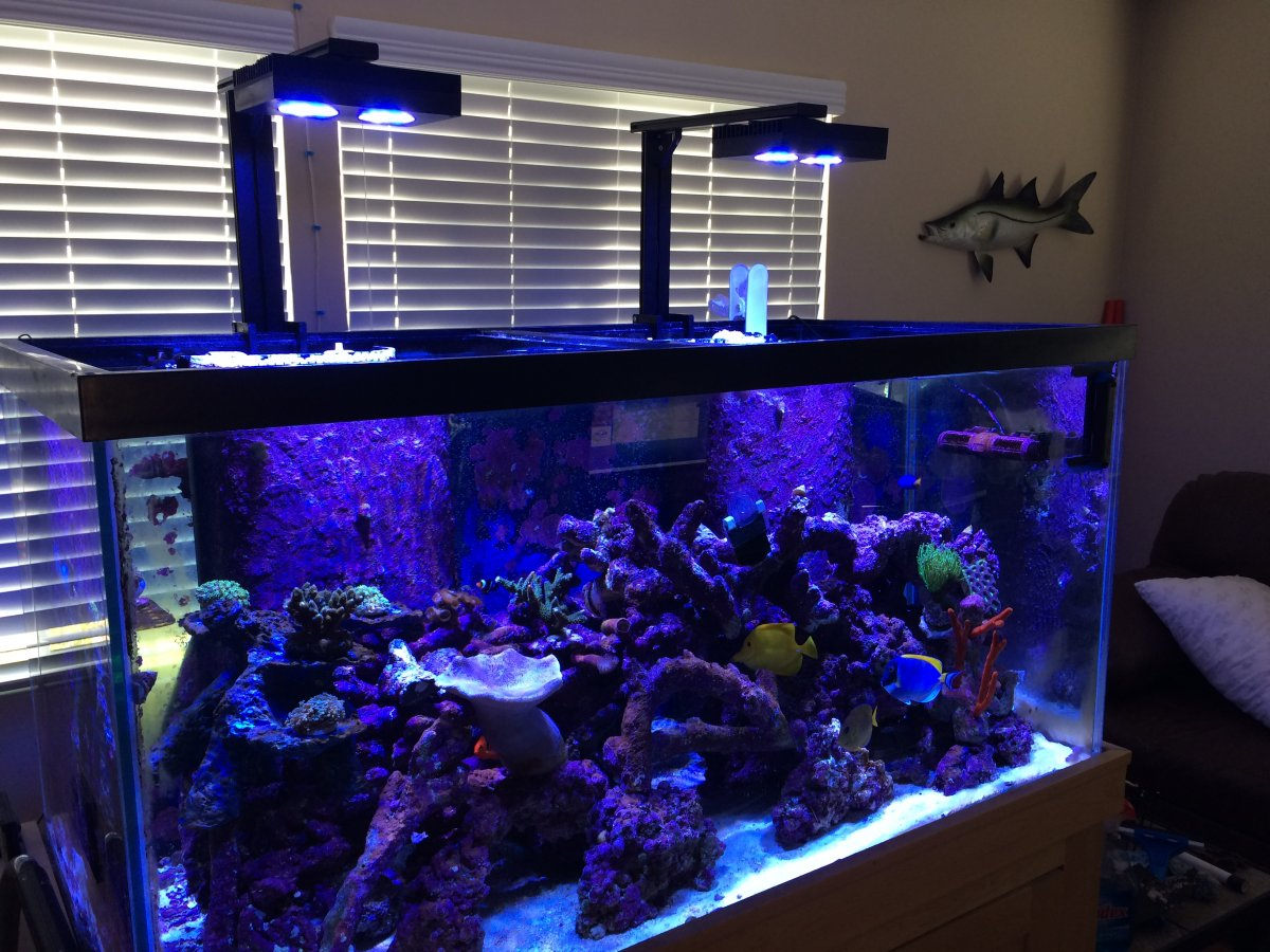 hydra fish tank lights