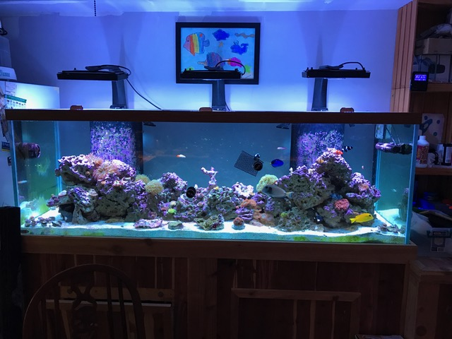 180 gallon setup for sale reef2reef saltwater and reef for 180 gallon fish tank