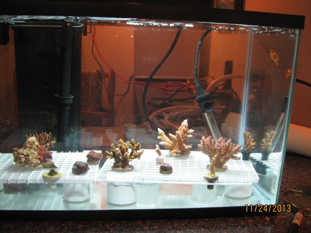 how to build a saltwater tank
