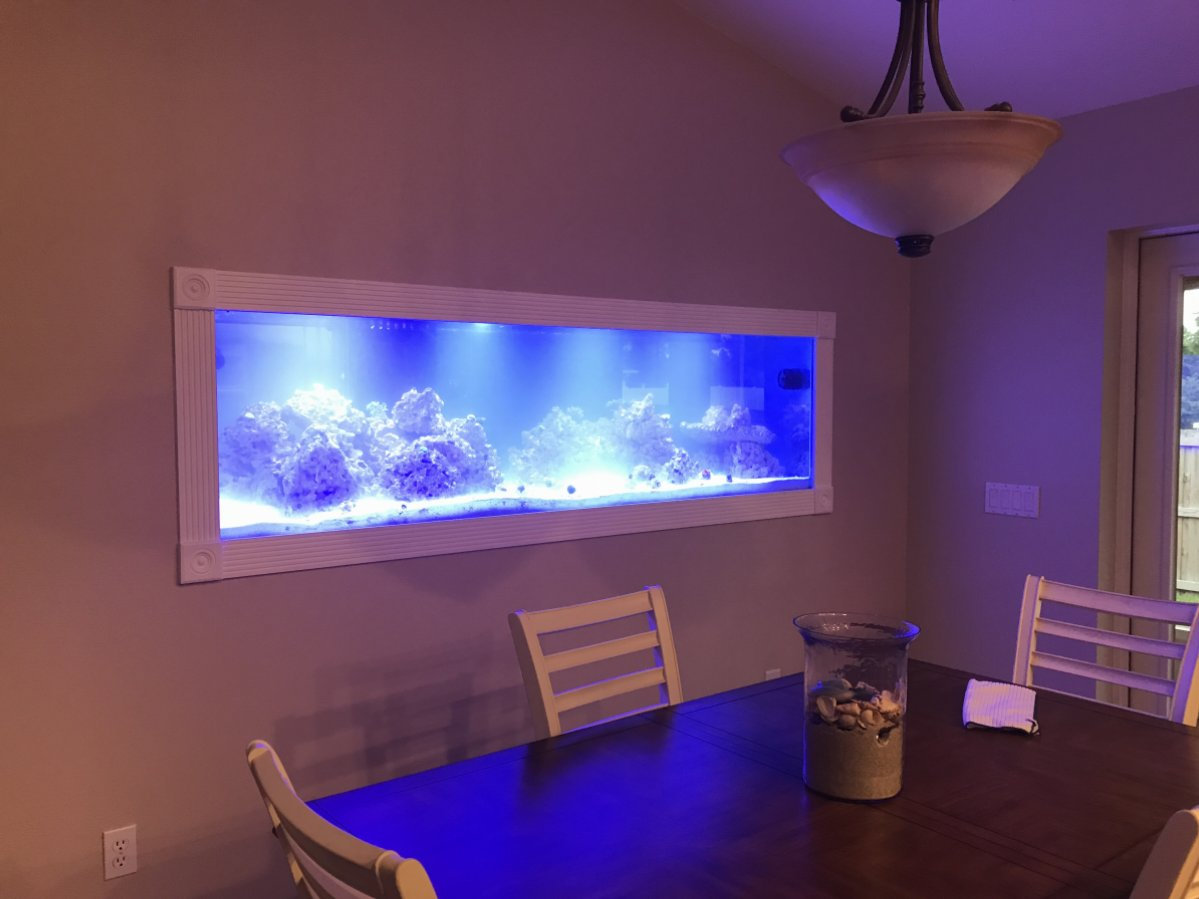 I was very unhappy with the coverage of the lights at 6 inches apart. Then a friend of mine @litenyaup noticed that each LED had a lense on it and said we ... & Black box lighting Fix | REEF2REEF Saltwater and Reef Aquarium Forum azcodes.com