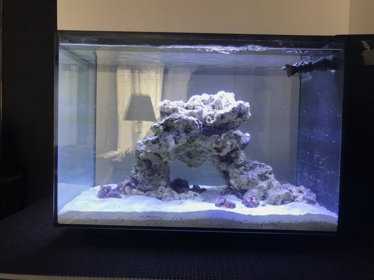 Nano Build Show Your Fluval Evo 13 5 Page 8 Reef2reef Saltwater And Reef Aquarium Forum