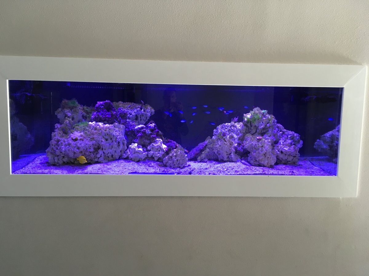 JDog's 270 gallon in-wall reef tank | REEF2REEF Saltwater