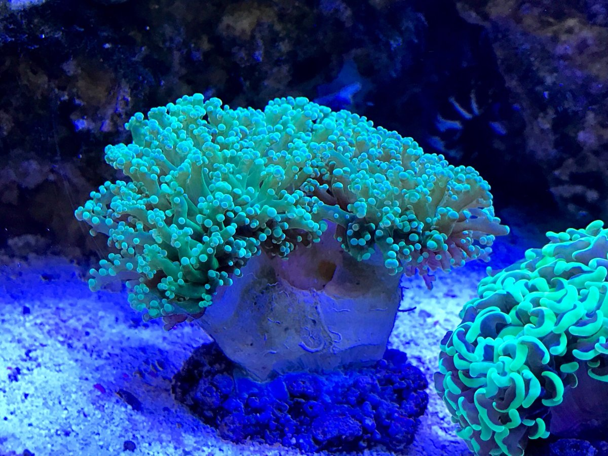 Show Us Your Sumpless Tank S Page 4 Reef2reef