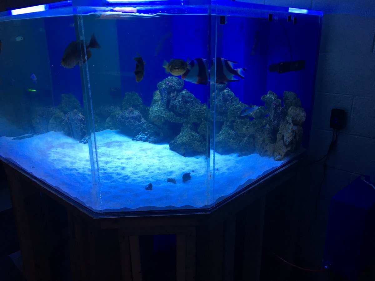 Freshwater aquarium fish milwaukee - Hello Everyone I Ve Been In This Hobby Heavily For A Year Now I Have A 150 Gallon Reef Tank And A 460 Gallon Fowlr I M From Milwaukee Wi And I M A Police