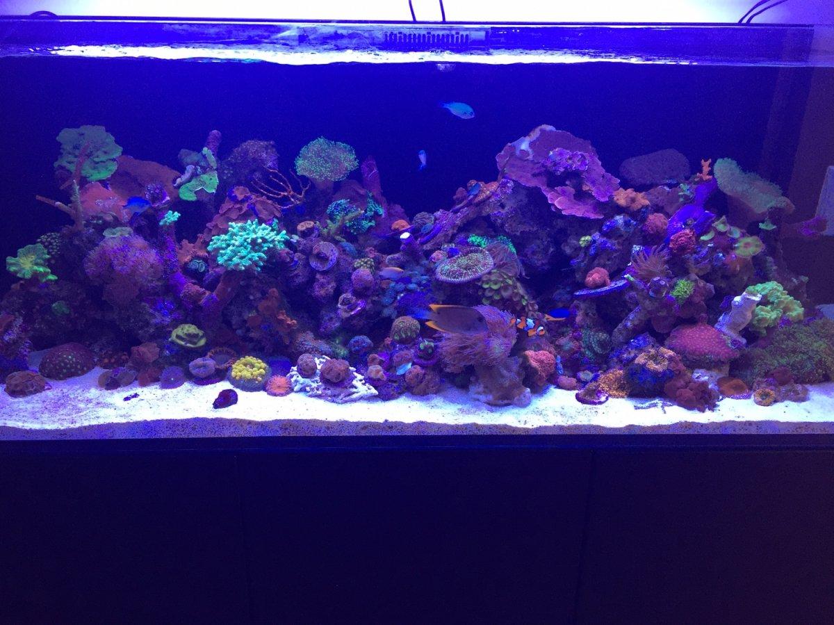 ThreadRed And 525xlReef2reef Saltwater Reef Sea Build Reefer kOnPwX80