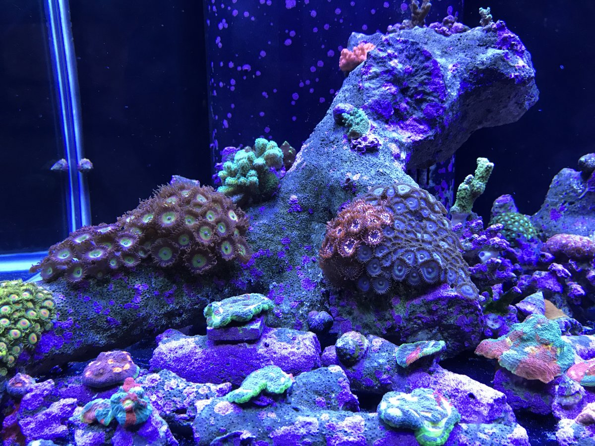 120 Gallon Frag Tank Page 2 Reef2reef Saltwater And