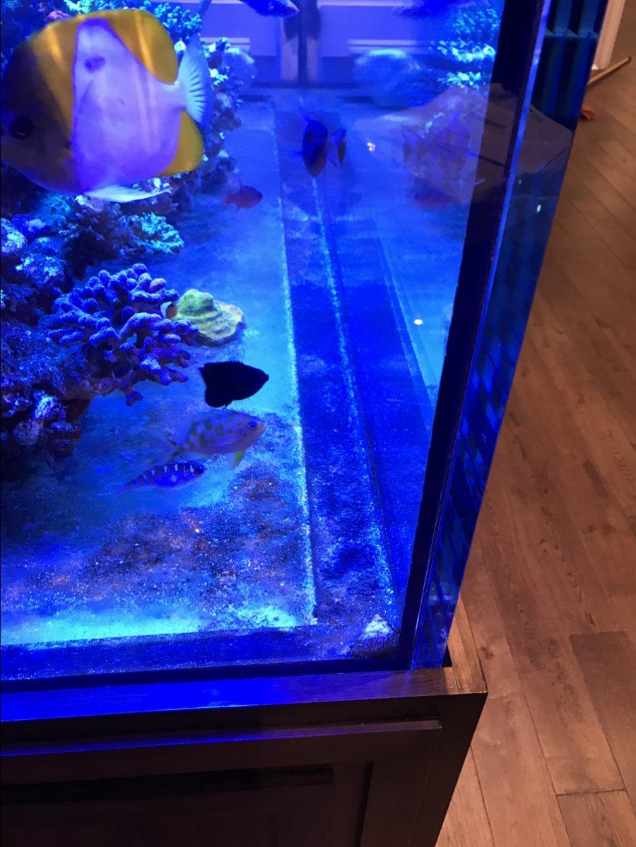 Tank Making Tips | REEF2REEF Saltwater and Reef Aquarium Forum