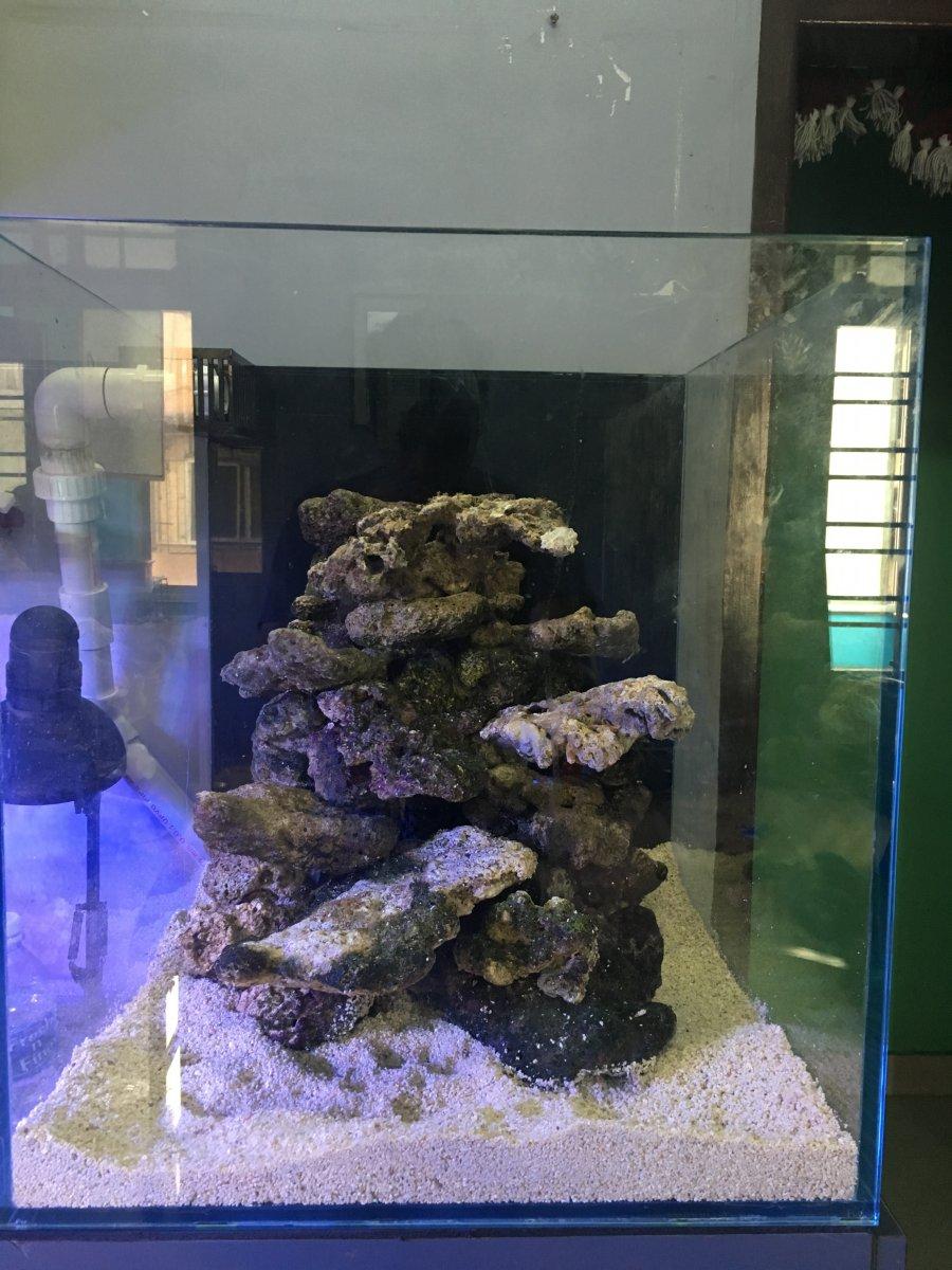 Ag 39 S 50g Sps Reef Reef2reef Saltwater And Reef Aquarium