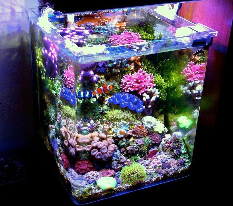 got a pico reef show it off here page 2 reef2reef saltwater and reef aquarium forum. Black Bedroom Furniture Sets. Home Design Ideas