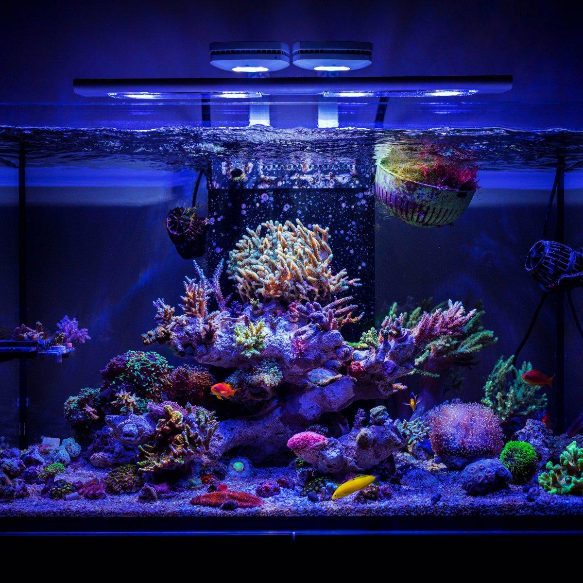 Johnny Ciotti S Red Sea Reefer 250 Reef2reef Saltwater
