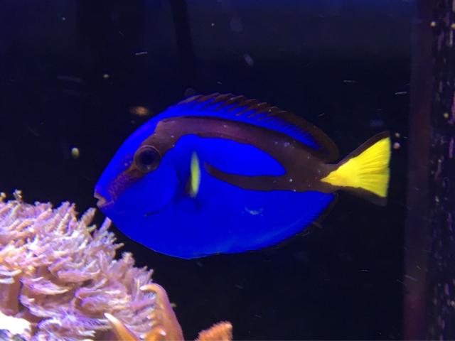 Ich in aquarium 1000 aquarium ideas for How do i treat ich in my fish tank