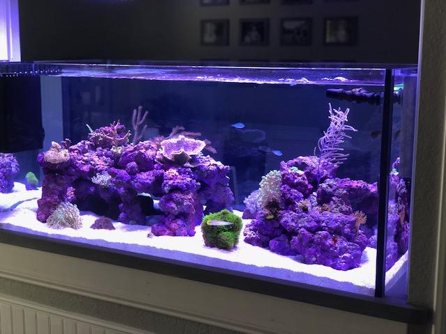 Fish Dying! Help   REEF2REEF Saltwater and Reef Aquarium Forum