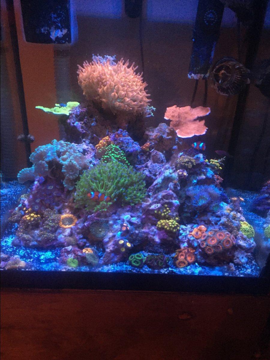 Aquascape Ideas Cube Reef Tank Aquascape