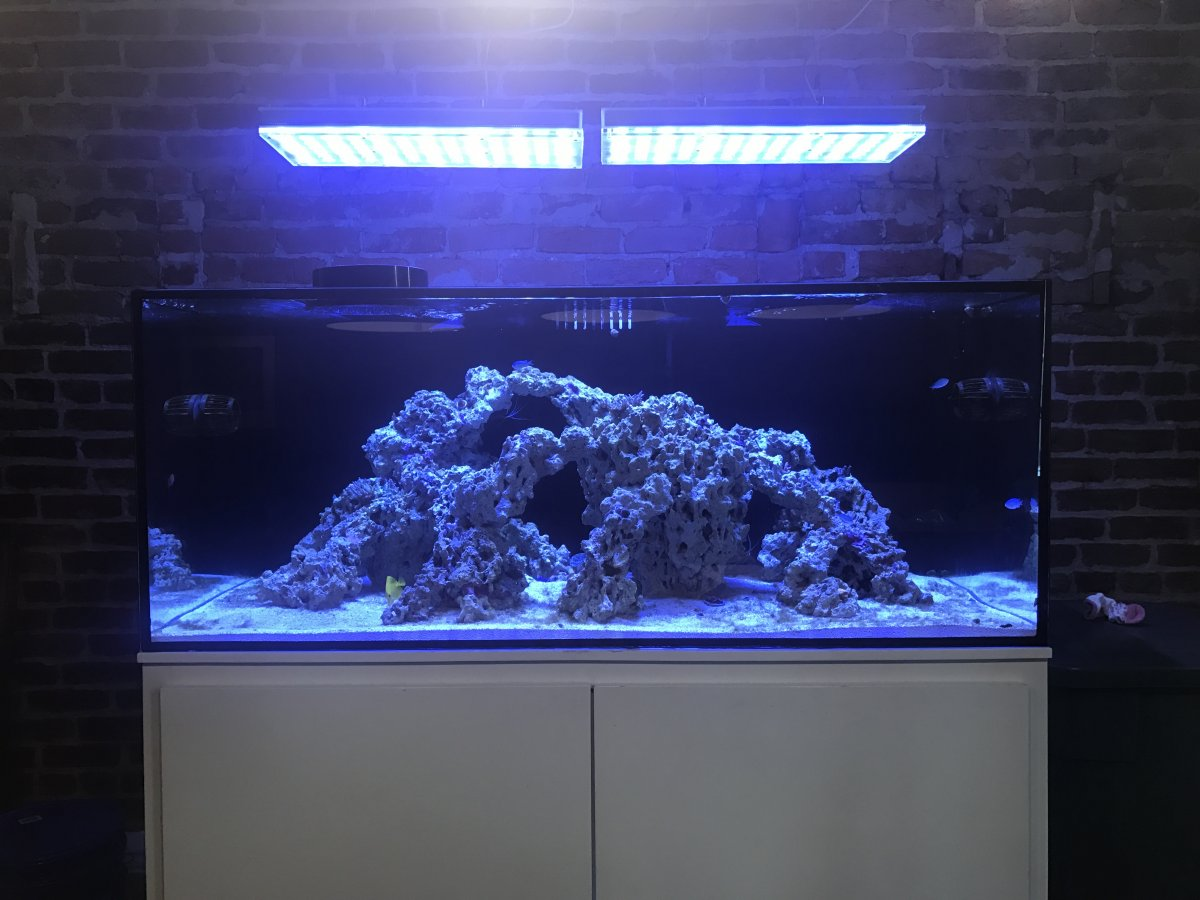 Need An Aquascaping Critique For An Sps Tank Thoughts Reef2reef