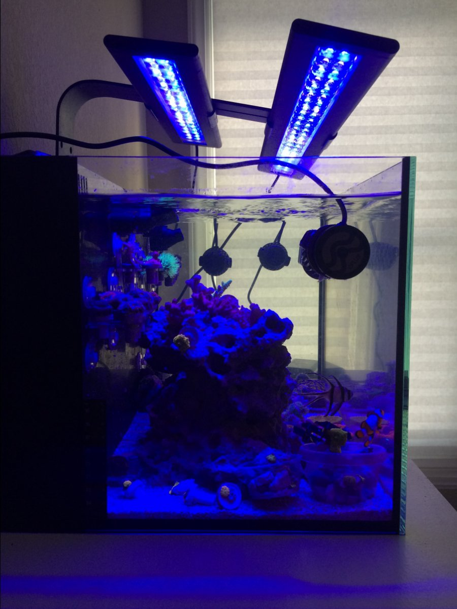 Thoughts On Current Usa Orbit Ic Led Reef2reef