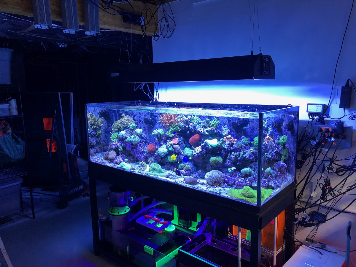 Swiched From Led Ghl Mitras To Hamilton Mh T5 Reef2reef