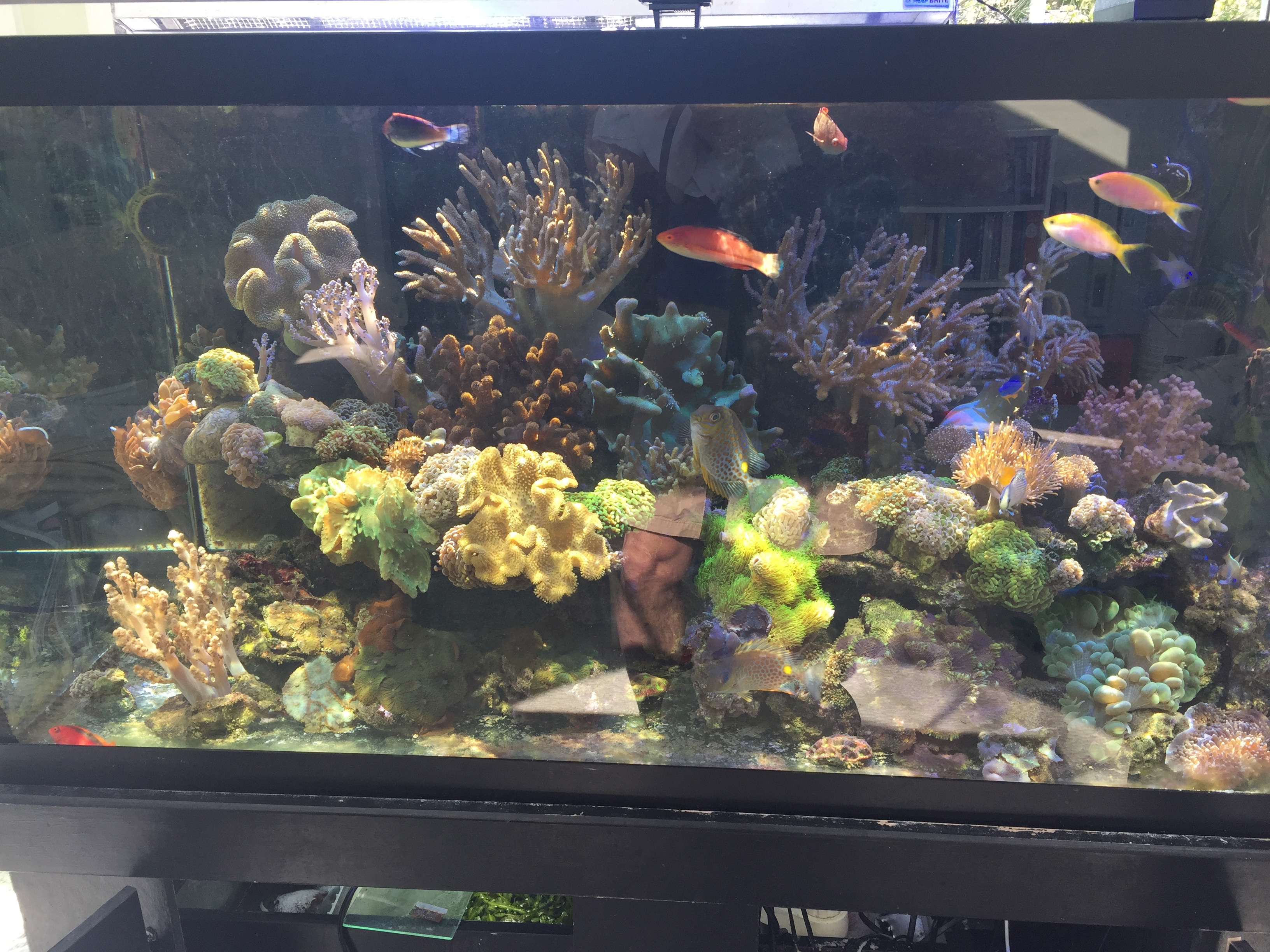 Stability and Consistency of a Reef Tank | REEF2REEF