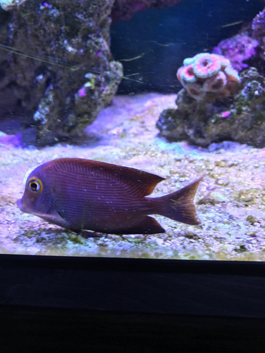 Freshwater aquarium fish boise idaho - Likes Received 31