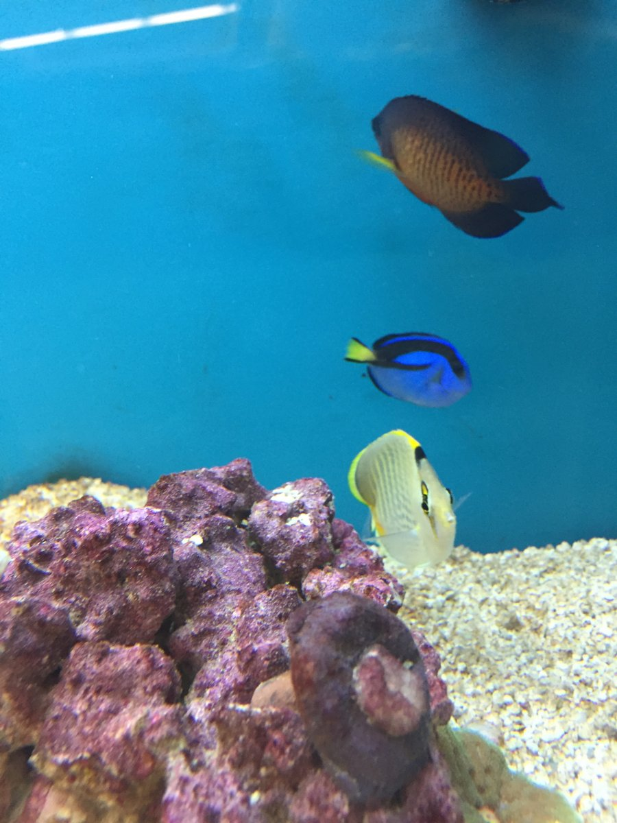 Beyond upset over these petco fish reef2reef saltwater for Petco saltwater fish