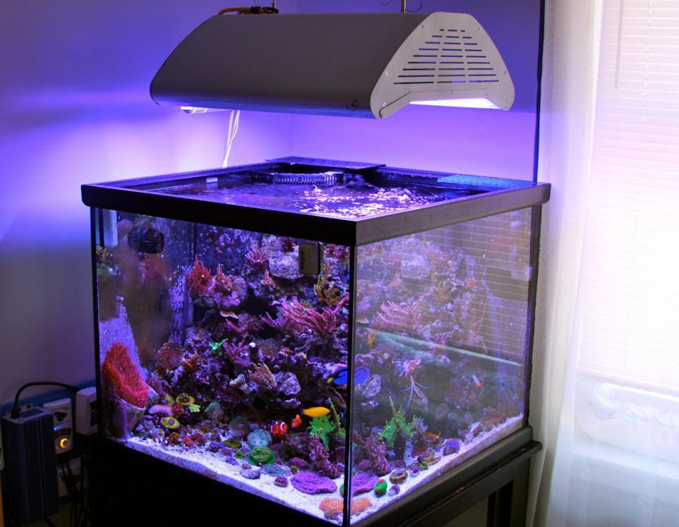 Zuska 39 s 93g cube 30x30 reef aquarium reef2reef saltwater for Aquarium cube