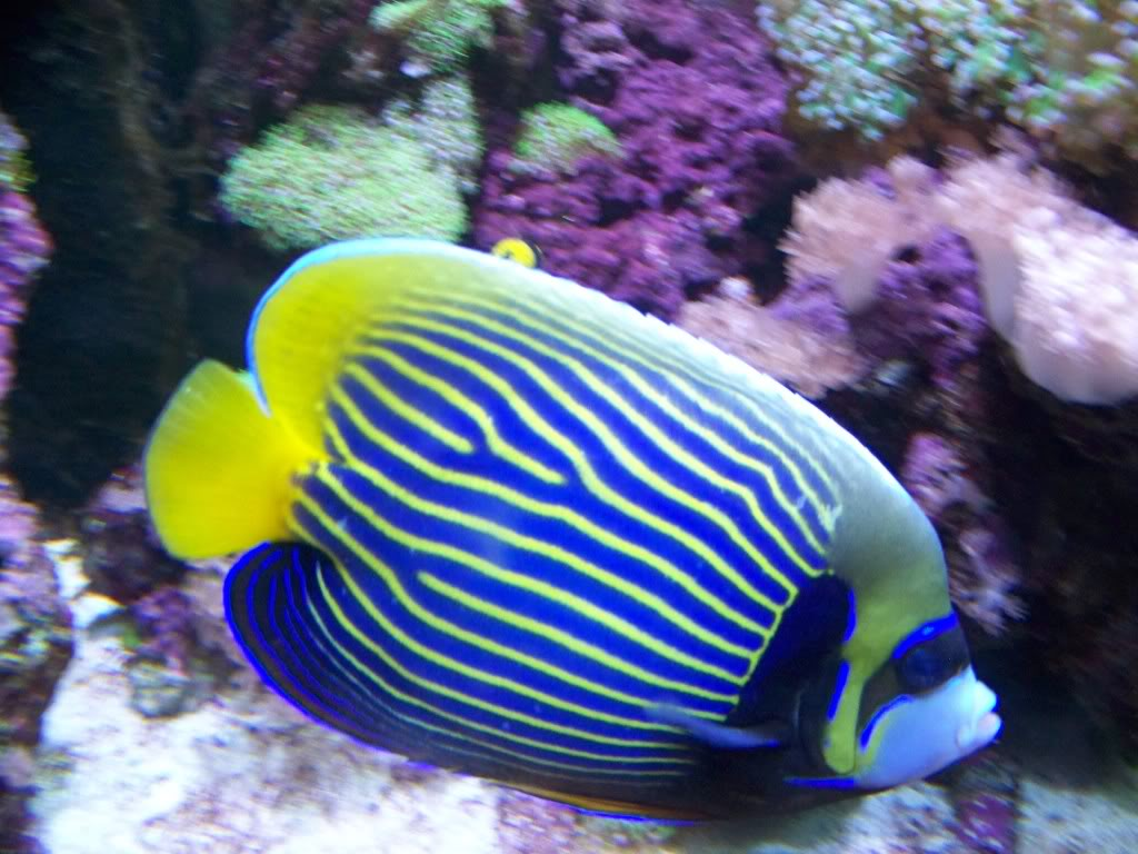 bloating in fish leading to death reef2reef saltwater and reef