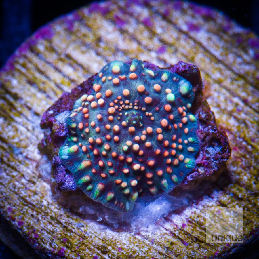 interesting mushroom 62 38.jpg