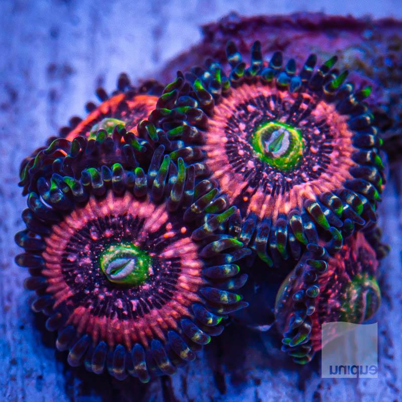 JJJ Sweet Pink Zippers 69 49.jpg