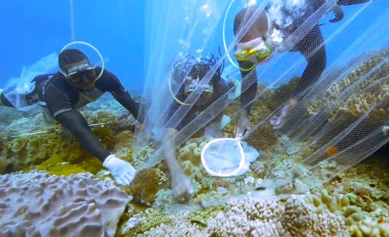 Kenya Tropical Sealife Divers collecting fish.jpg