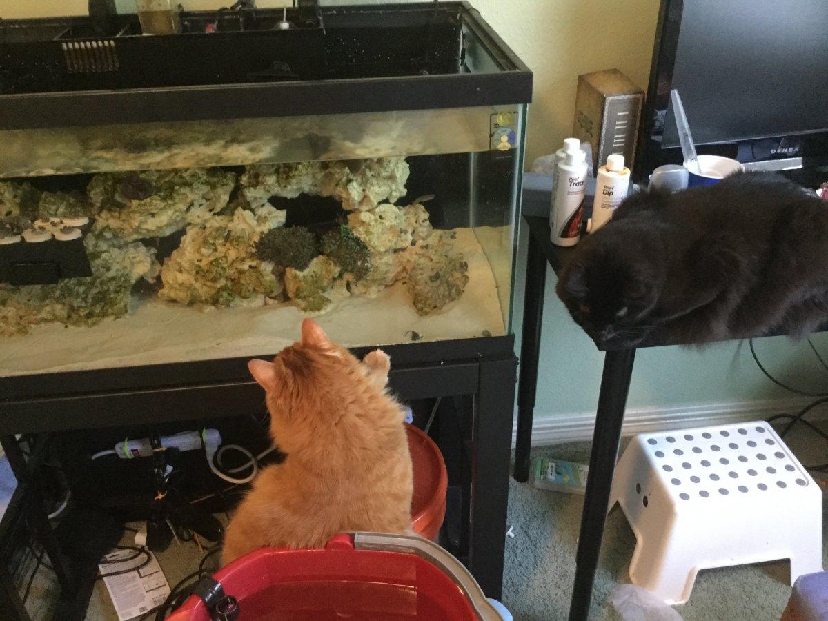 Kitten Helpers.JPG